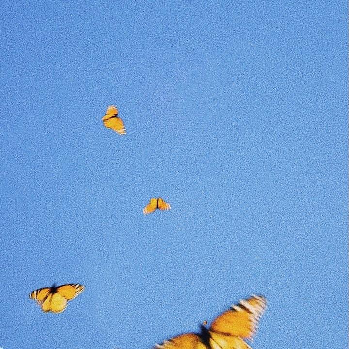 Fiji Blue - Butterflies